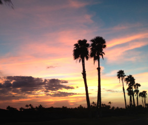 Kona Sunset Palm Tree png