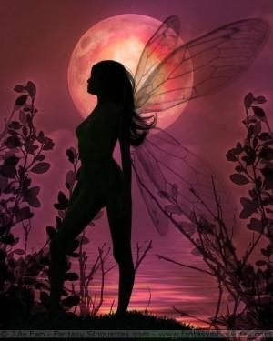 Magical Creatures Magical Fairies