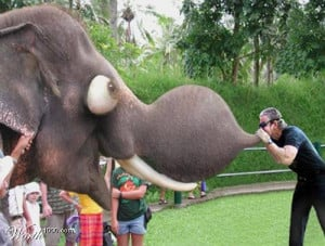Funny Elephants Pictures