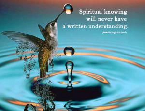 Hummingbird Water Droplets pamela quote