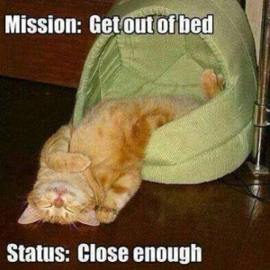 Mission Get out of bed – cat meme