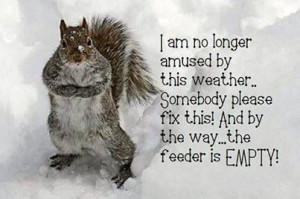 Cold Weather quotes quote winter snow cold weather squirrel winter ...