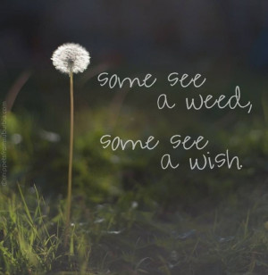 its a weed and people try to get rid of it but it becomes a wish and ...