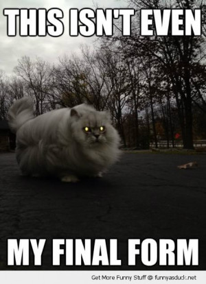 isn't final form fat evil cat lolcat animal glowing eyes funny pics ...