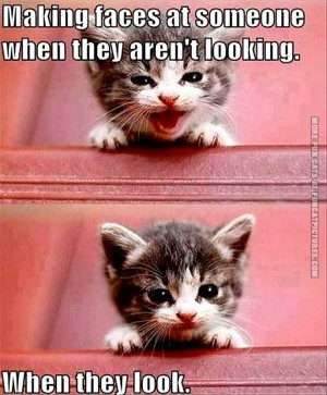funny-cat-pics-making-faces-at-someone