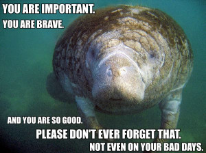 Calming Manatee: My new discovery