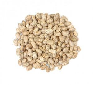 pinto bean plant