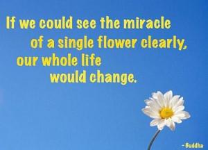 Flower change buddha quote
