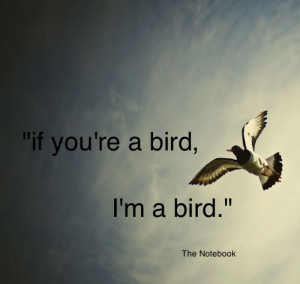 awesome-birds-quotes-pictures-1-898e551b.jpg