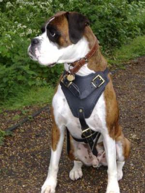 ... Dog images, dog animations, dog quotes, dog training tips, funny dogs