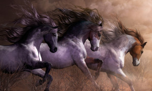 Horse Quotes Facebook Covers Hd Horse Wallpapers Horse Backgrounds ...