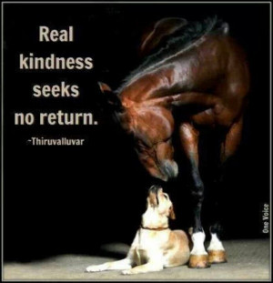 Pin Horse Quote Pinterest