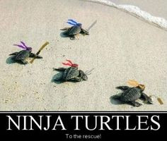 Cute Ninja Quotes With funny quote