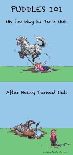 Savvy Horse Quotes & Jokes