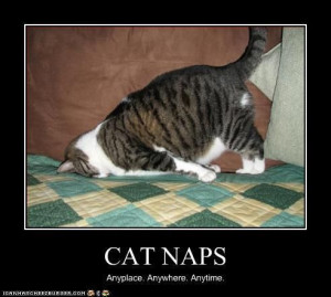 Cat Naps / Grumpy Cat Meme / Grumpy Cat Pictures