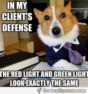 dog-lawyer-funny-photo.jpg