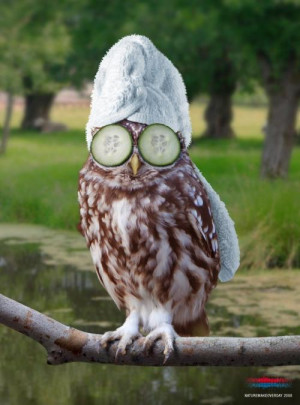 Funny owl images