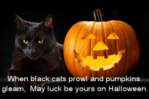 Black cats and Jack 0 Lanterns are thought of as spooky symbols of ...
