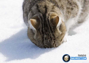 68 Awesome Cats Playing In The Snow