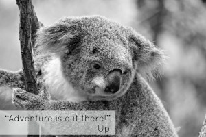 The Most Inspiring Movie Travel Quotes on Cute Photos of Sleepy Koalas