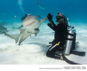 funny shark high five