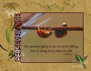Ladybugs Perseverance Digital Art
