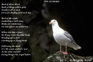 201261910155_bird-127-Beautiful-bird.jpg