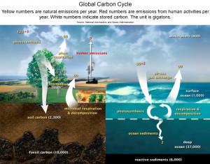 Aquifer Water Cycle Diagram