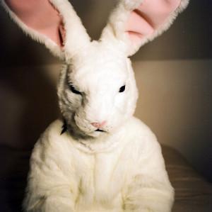 animal, animals, bunny, costume, cute, donnie darko, ear, easter, fasm ...