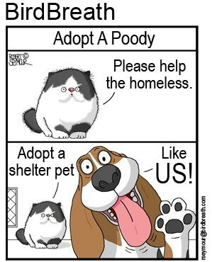 Via Animal Allies Rescue Foundation (AARF)