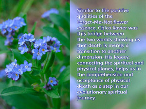 Forget-Me-Not: a bridge between two dimensions