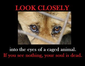 eyes of a caged animal. If you feel nothing, your soul is dead. Cages ...