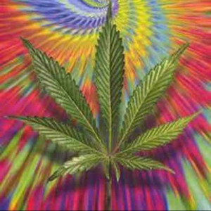 stoner quotes quotes stoner tweets 33 following 3 followers 16 more ...