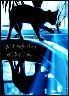 ... photos work quotes photo quotes cat photo reflection quotes photo fun