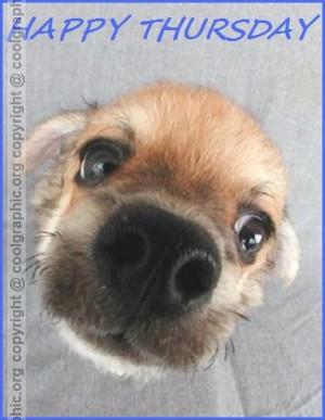 Happy Thursday Cute Cute dog wishing you happy