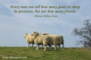 Black Sheep Quotes And Sayings Or sheep he possesses,