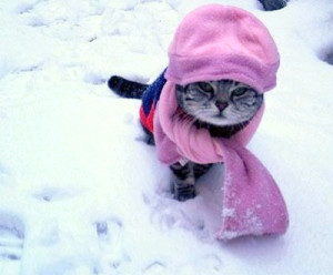 You are prepared for winter … is your pet?
