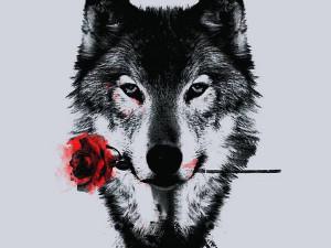 wolf love 2 jpeg wolf love wolf love white wolf middot love
