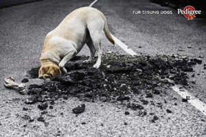 Pedigree commercial - for strong dogs, dog digging in road, very funny ...