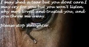 HORSE TEARS photo sad-horse-1.jpg