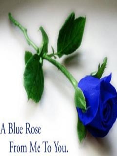 Blue Rose From Me To You Happy Rose Day