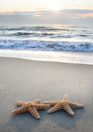Starfish. Every life form seems to reach out to its own kind in order ...
