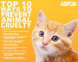 animal-cruelty-cat-1280x1024