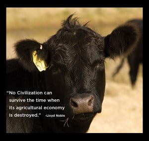 cow #agriculture #quote #love