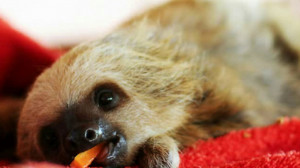 Funny Sloth Animal Pictures...