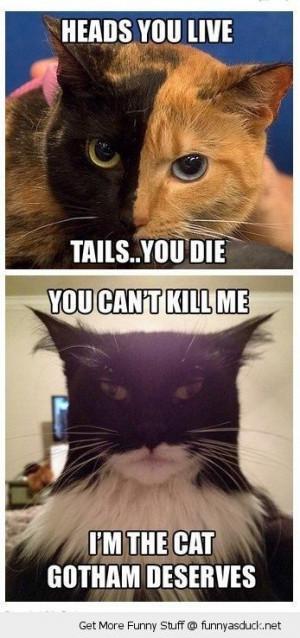 harvey dent two face batman cats animals dark night movie film cinema ...