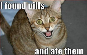 Today, I'm going to teach you how to make lolcats.