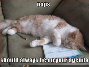 ... net/assets/702/original/funny-pictures-cat-has-naps-on-his-agenda.jpg