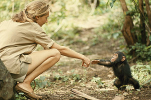 Jane Goodall and young chimpanzee in 1964. ( i.imgur.com )