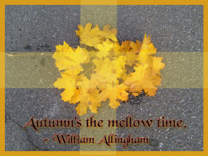 Funny Autumn Quotes1